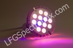 LFG Spectra DS06